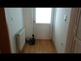 Чудо кот открывает все двери
